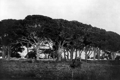The pines of Bahjí on the land of the Jamal brothers, site of the dinner which signaled that Bahá'u'lláh could leave the boundaries of the walled city.